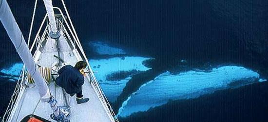 Pelagic Sail