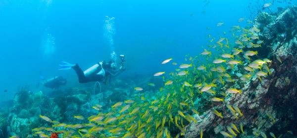 Scuba Diving, Cartagena