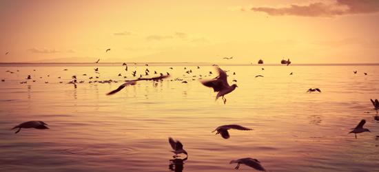 Sea Birds of Thessaloniki