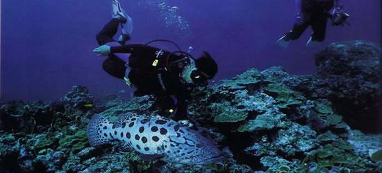 World Class Diving