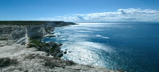 The Immense Coast