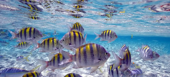Colourful Fish, Cayo Arena
