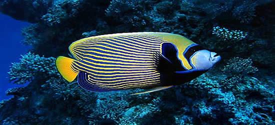 Unbelievable Fish