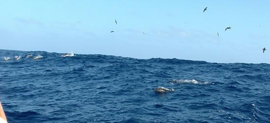 Dolphins, Strait of Gibraltar