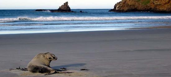 Friendly Sea Lion