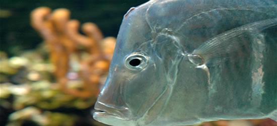 Incredible Fish at the Aquarium