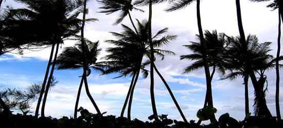 The Whispering Palms of the BVI