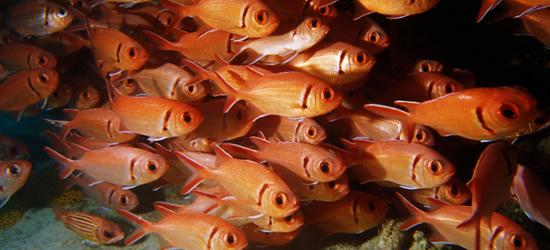 Marine Life of the Cape Verdes