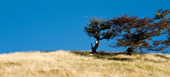 Autumn Patagonia, Tierra del Fuego