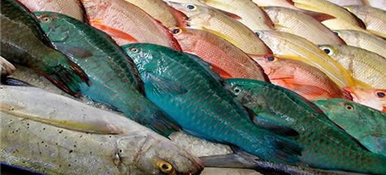 The Fish Market, Tahiti