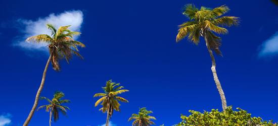 Palm Trees at the Baths, Virgin Gorda, BVI