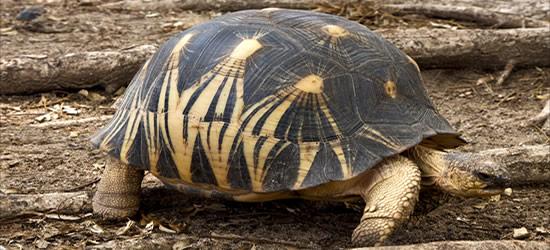 Turtle, Madagascar
