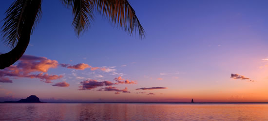 Palm Tree Silhouette, Phuket