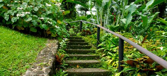 Botanical Garden, Saint Vincent